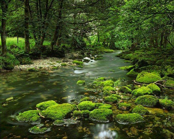 Ezo grupa doo Sanacija ekoloških akcidenata